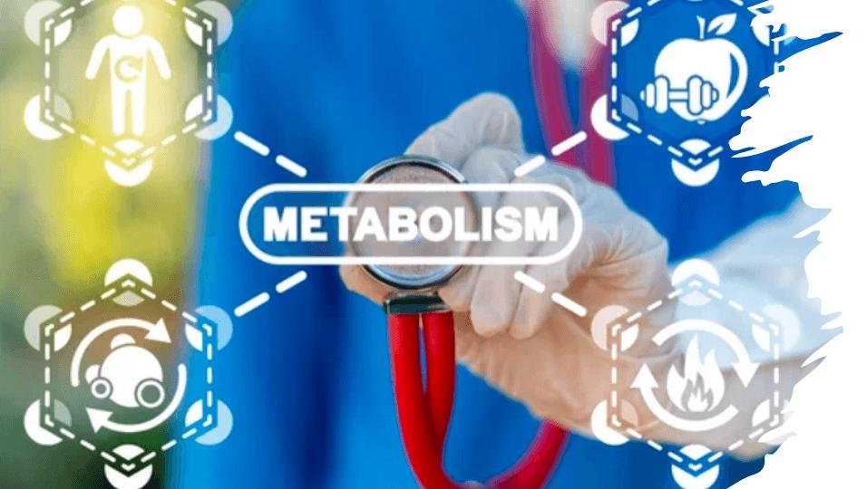 métabolisme-abdos-en-v