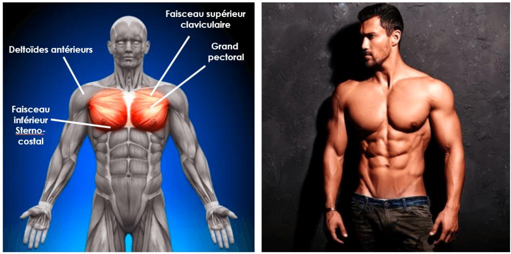 exercice-pectoraux-banc-de-muscu